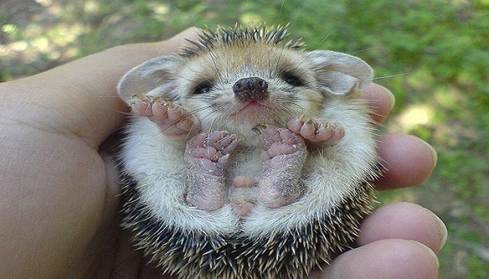 baby hedgehog netmarkers