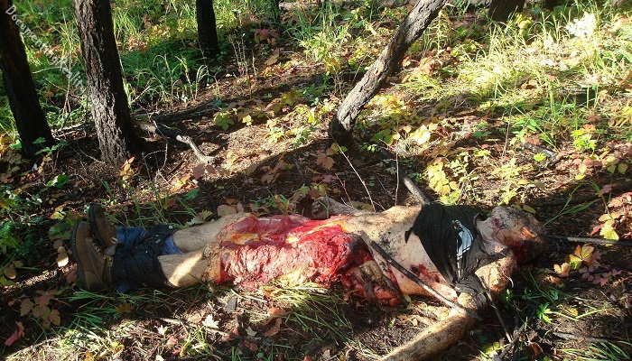 man-killed-by-bear-2
