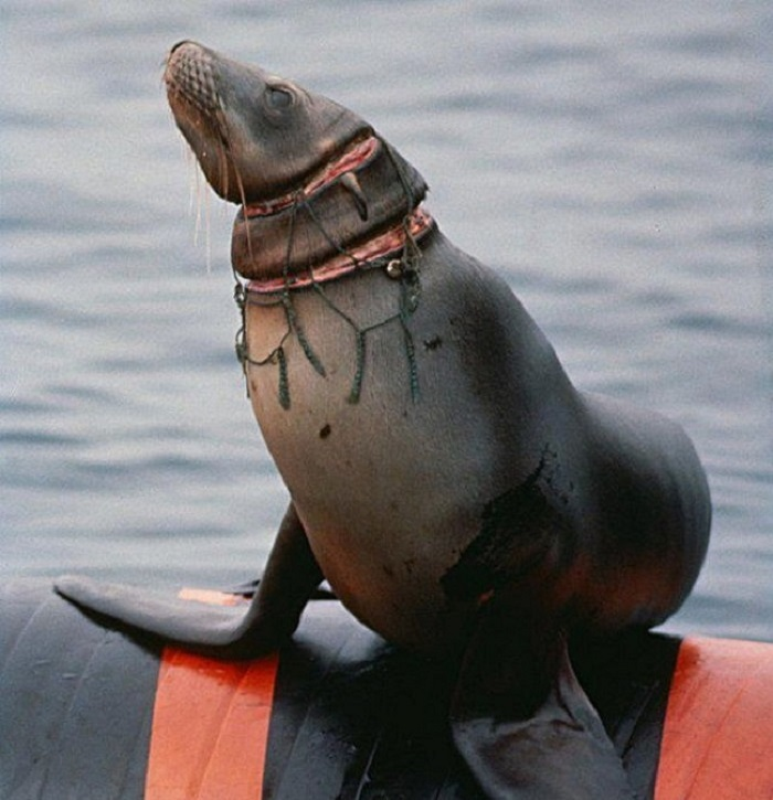 Seal-Trapped-in-trashnetmarkers