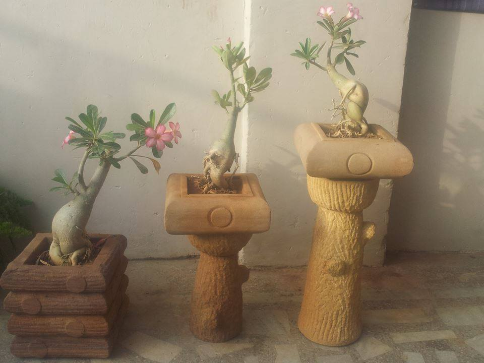 stone planters for bonsai by Stonemart