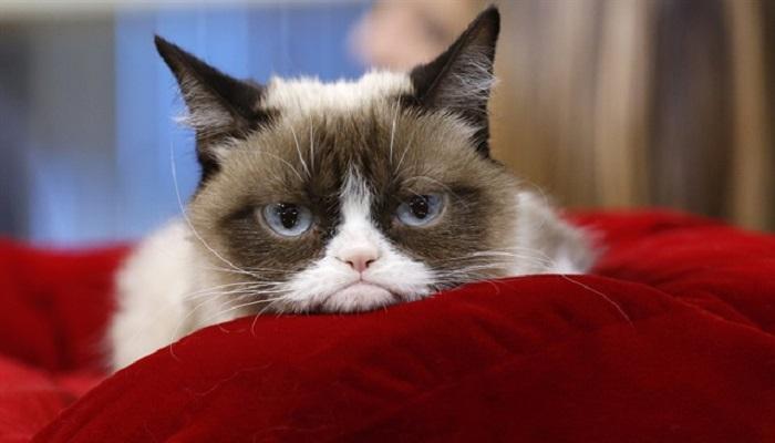 Grumpy-netmarkers