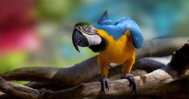 Macaw-netmarkers