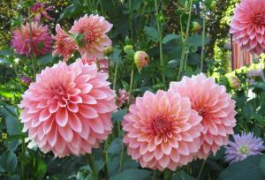 flower-netmarkers