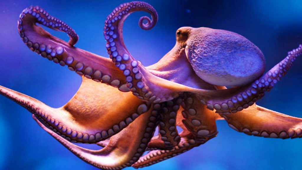 Octopus-netmarkers