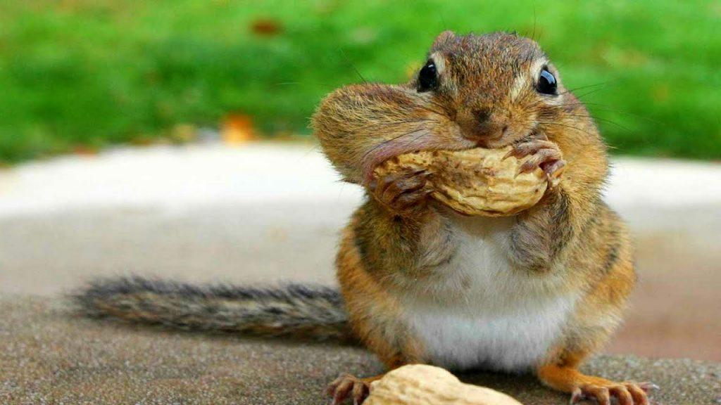 Squirrels-netmarkers
