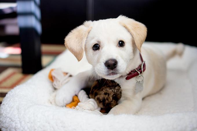 dogs-netmarkers