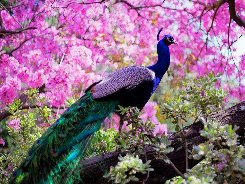 peacock-netmarkers
