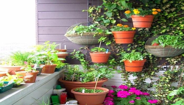 plants2-netmarkers