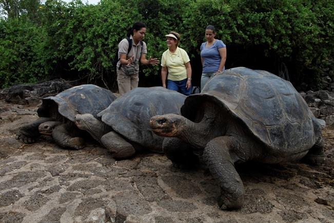 Galapagos Giant Tortoise-netmarkers