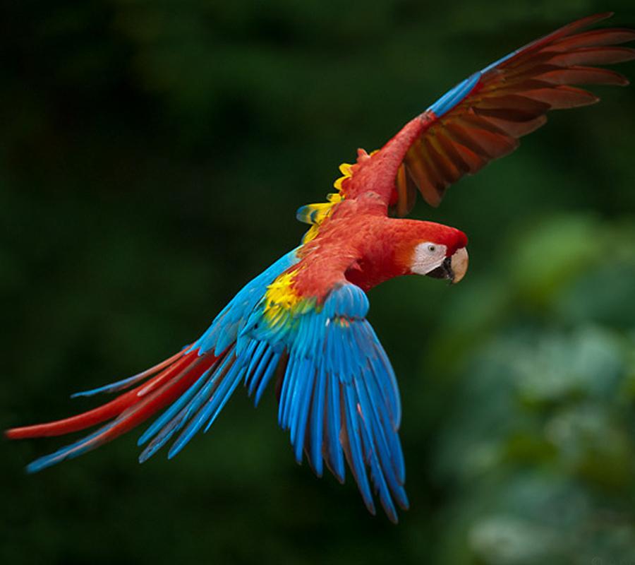 Macaw1-netmarkers