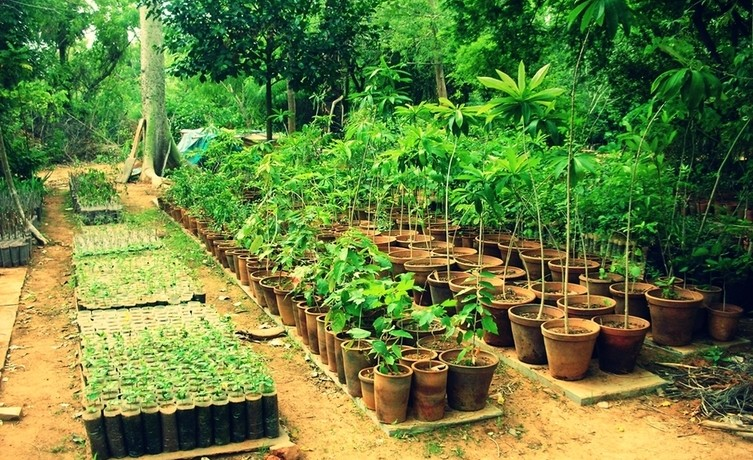 For their medicinal values-netmarkers