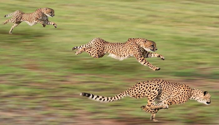 wildlife-netmarkers