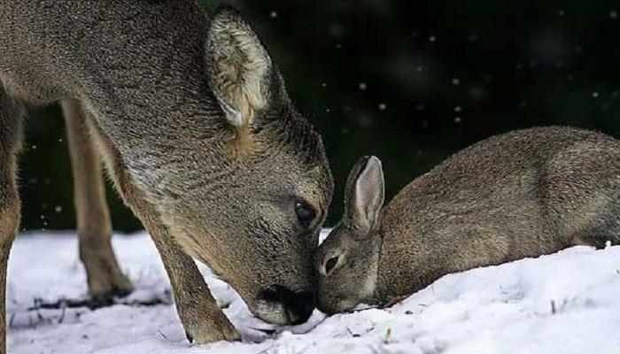 Deer and rabbit friendship-Netmarkers