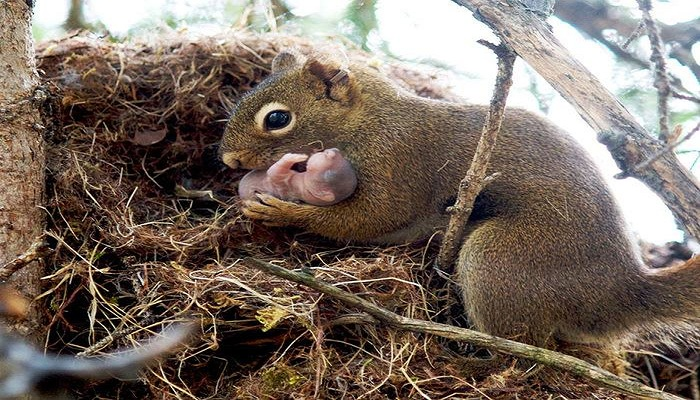 Orphans are adopted by squirrels-Netmarkers