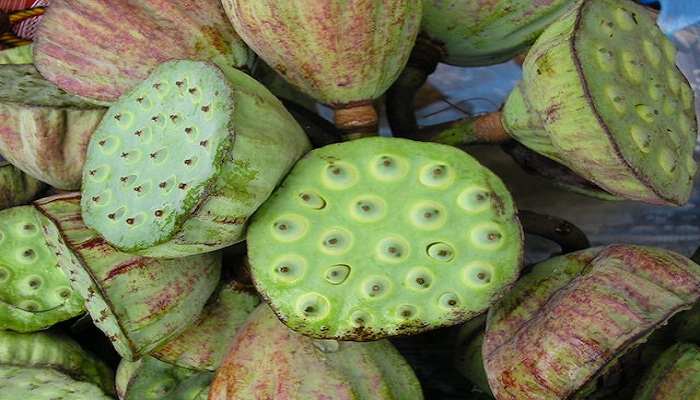 Lotus fruit benefits-Netmarkers